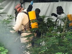 Federal agents and local authorities raid a medical marijuana operation on Monday in Helena, Mont.