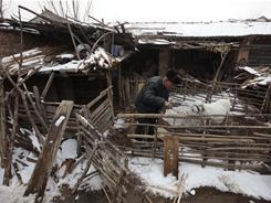Farmer Wen Chungui, 81, fixes fences as he contemplates relocating from his home in Wenzhuang village in northern China's Hebei province.