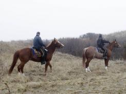Emergency personnel use horses to search through the brush near Jones Beach in Wantagh, N.Y. on Monday.