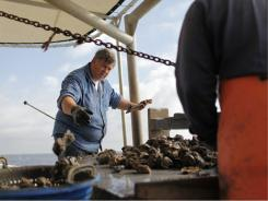Sam Slavich, 60, is one of the few oystermen still venturing out to the bayous, four days a week, harvesting oysters