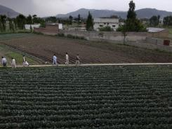 Pakistani men walk in a field on May 5 next to the house where al-Qaeda leader Osama bin Laden was caught and killed in Abbottabad, Pakistan.