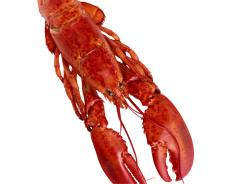 """Zabar's deli, a famous destination for Manhattan foodies, is changing the name of its """"Lobster Salad."""""""
