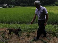 Naoto Matsumura's dog runs to meet him as he checks on his rice paddy in Tomioka, Fukushima, northeastern Japan.