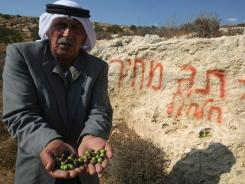 Palestinian farmer Mussa Samamreh holds olives from his destroyed trees that  residents say were broken and uprooted by Jewish settlers.