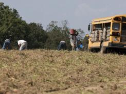 Only five farm hands showed up on Thursday to pick sweet potatoes, said farmer Casey Smith in Cullman, Ala. He usually hires about 25 laborers, he said.