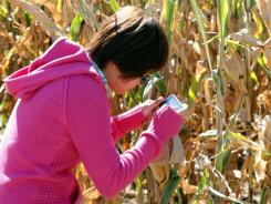 Jun Sim, a Malaysian student attending the University of Nebraska, takes a photo of an ear of corn during her visit to a farm near Hooper, Neb. The number of international students to U.S. colleges rose during the 2010-11 academic year.