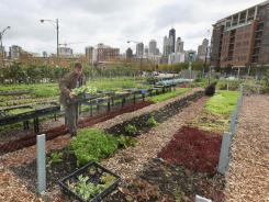 Nathan Whittaker harvests produce at Chicago's non-profit City Farm in September. President Obama launched an initiative last year to promote community-based efforts to save outdoor spaces.