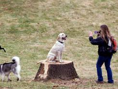 Ace the yellow lab poses for owner Tanya Robb at the newly opened Hanscom Bark Park in Omaha on Nov. 19. There are now more households in the U.S. with dogs than with kids.