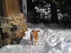 A Welsh corgi dog named Ole survived, bringing some comfort back to a heartbroken family and town.