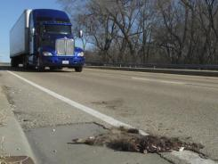 In this photo taken Jan. 4, 2012, a tractor-trailer rumbles by a roadkill raccoon in southwestern Illinois.