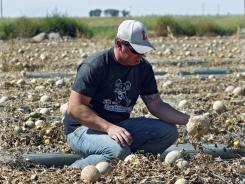 Contaminated cantaloupe at Jensen Farms, a small Colorado grower, triggered an outbreak last fall that killed 30 people.