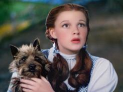 A scene from The Wizard of Oz, featuring Judy Garland as Dorothy with her little dog, Toto.