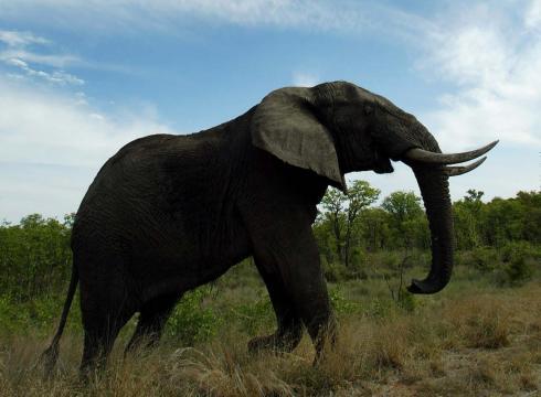 Elephant Kills Crocodile Trump Killed an Elephant