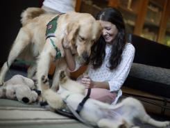 Law student Anna Idelevich, 22, plays with Hooch, top, a 19-month-old golden retriever and Stanley, a 4-month-old golden retriever, in between final exams May 2 at Emory University in Atlanta.