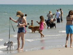 Dogs play in the sand and surf with their owners at Canova Beach Park at Indian Harbour Beach in Florida.