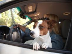 Animal protection and automobile safety officials are trying to spread the message that pets should be restrained while you drive.