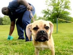 Daniel Allen cleans up after his puggle in May.