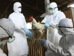 Although a U.S. biosecurity committee advised against publishing the bird flu research, some health officials and scientists said it could help other countries learn how to counter it. Here, Balinese government officials prepare to cull chickens in April as a precautionary measure to prevent the spread of bird flu.
