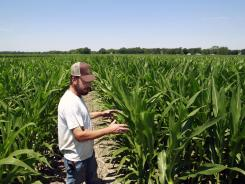 Pat Giberson checks on his corn crop in Pemberton, N.J., Friday.