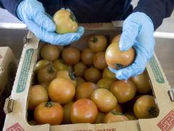 An agricultural specialist inspects tomatoes in Nogales, Ariz.