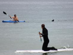Walter Szulc Jr., in kayak at left, looks back at the dorsal fin of an approaching shark at Nauset Beach in Orleans, Mass., in Cape Cod on July 7.