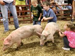 Children and pigs scramble during a contest at the Frederick County Fair in Stephenson, Va., this week. Federal health officials have offered pointers for avoiding illness when visiting animal areas at state and county fairs.