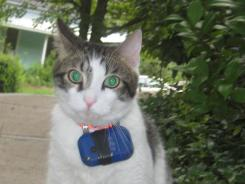 A cat wears a camera to record its outdoor activities.