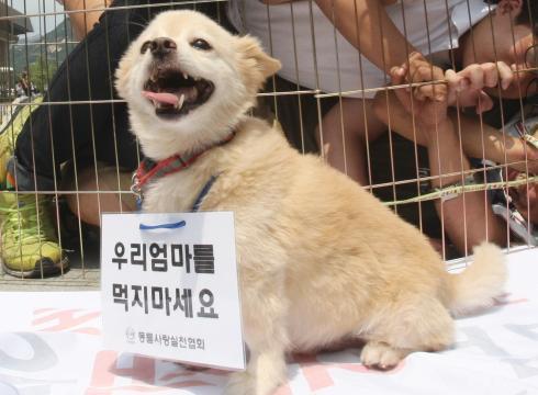 Koreans Eat Dog Opposing Eating of Dog
