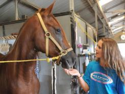 Sara Ann Wages continues to bond with a neglected or abused horse adopted by her family from Twelve Oaks Horse Farm in Madison County Mississippi.