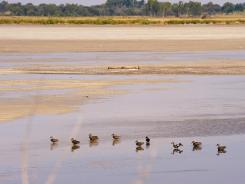 Thousands of migratory waterfowl — including these ducks — call Quivera National Wildlife Refuge in Kansas home every fall as they make the journey to their winter homes.