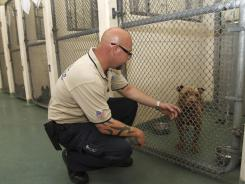 Miami-Dade County Animal Services investigator Gary Boyett looks at a pit bull being held at the county shelter in Medley, Fla., on June 29.