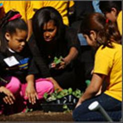 White House lawn: First lady Michelle Obama plants seedlings with schoolchildren on Wednesday as part of her healthy foods program.