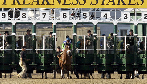 A frisky Barbaro breaks through the gate before the start of last year's Preakness. Moments after a restart, the colt shattered his right hind leg.