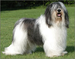 Polish Lowland Sheepdog named Malina will strut her stuff at the World Eukanuba Challenge in Long Beach this weekend.