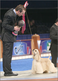 Vamos, a Swiss Cocker Spaniel, won the Eukanuba World Challenge Sunday in Long Beach, Calif.