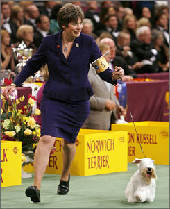 Handler Margery Good leads her Sealyham terrier, Charmin, around the floor at the Westminster Dog Show in New York. Charmin won the terrier group on Monday and could win Best in Show on Tuesday.