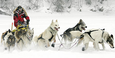 http://i.usatoday.net/sports/_photos/2008/02/28/iditarod-med.jpg