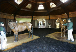 Big Brown's breeding destination will be Three Chimneys Farm, where 2004 Triple Crown contender Smarty Jones resides.