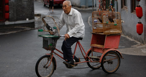 One of the Hutong's more colorful residents cycles through with his myna birds. The neighborhoods, once for the wealthy, are now for all social classes and a disappearing tradition.