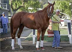 Curlin gets a walk at Santa Anita as he prepares for his title defense.
