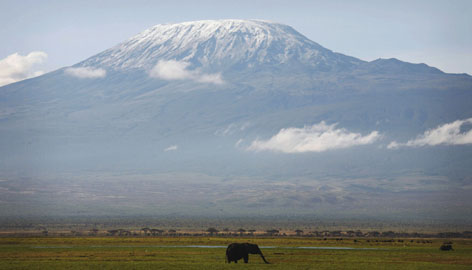 An elephant grazes at the foot of Mount Kilimanjaro in the Amboseli national park in southern Kenya. LPGA Hall of Famer Betsy King, 53, will begin a hike up the tallest mountain in Africa and hopes to raise $100,000 in her 'Hike For Hope'.