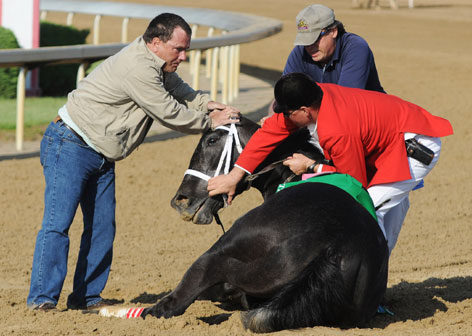 Track personnel try to hold down Eight Belles after the 134th Kentucky Derby, May 3 at Churchill Downs. Eight Belles was euthanized after suffering injuries to both front legs following a second-place finish in the Kentucky Derby.