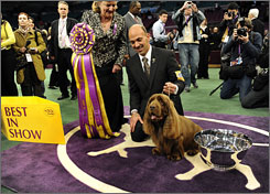 Handler Scott Sommer poses for pictures with Sussex Spaniel Stump after winning Best In Show. The 10-year-old Stump became the oldest Westminster winner in history and the first of his breed to win the silver cup.