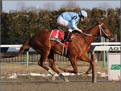 Haynesfield, ridden by Ramon Dominguez, has been dominant at Aqueduct Racetrack. Here, the colt captured The Whirlaway Stakes at Aqueduct on Feb. 7.