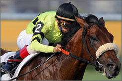 John Velazquez guides Quality Road into the homestretch of his Florida Derby victory Saturday at Gulfstream Park. The colt set a track record in the race, going 1 1/8 miles in 1:47.72.
