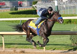 Pioneerof the Nile, with Joe Steiner in the saddle, works out at Churchill Downs. He was a suprising pick by Garrett Gomez to win the Kentucky Derby.