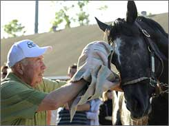 Retired principal Thomas McCarthy grooms General Quarters, his first Derby contender in 50 years.