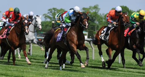 Nicanor (10), galloping to victory in a race at Delaware Park on May 12, is one of three full brothers of Barbaro, the Thoroughbred who made headlines for his 2006 Triple Crown attempt and subsequent fight for survival after a leg fracture in that year's Preakness.