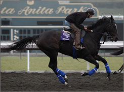 Zenyatta, with exercise rider Steve Willard aboard Thursday, will be the fourth female horse to try to win the Breeders' Cup Classic. Of the previous three to try, none finished better than third.
