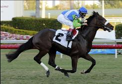 Jockey John Velazquez rides Lentenor, a full brother of 2006 Kentucky Derby winner Barbaro, to win the ninth race at Gulfstream Park on Wednesday, in Hallandale Beach, Fla. Lentenor broke his maiden to win the 1 1/16-mile race on the turf by 3 1/2 lengths. Barbaro and Lentenor are sons of Dynaformer.